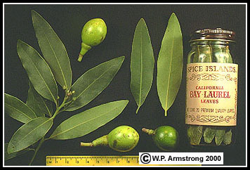 Allspice Bay Rum Bay Leaves Capers Cloves Nutmeg Witch Hazel Photos