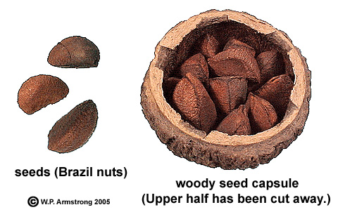 how to use brazil nut oil