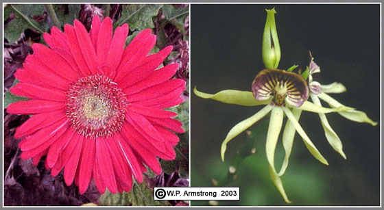 Common bisexual flowers