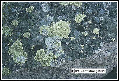 Rock Lichen Photos