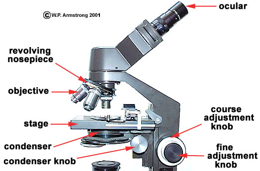 Lab manual exercise 1 compound microscope showing the 10x ocular eyepiece and four objectives 4x 10x 40x and 100x one objective is not in view ccuart Image collections