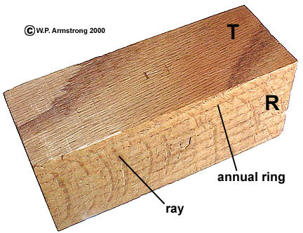 Exam 5 hints a block of oak wood showing the tangential plane t and the radial plane r the parallel lines on the radial side are annual rings ccuart Images