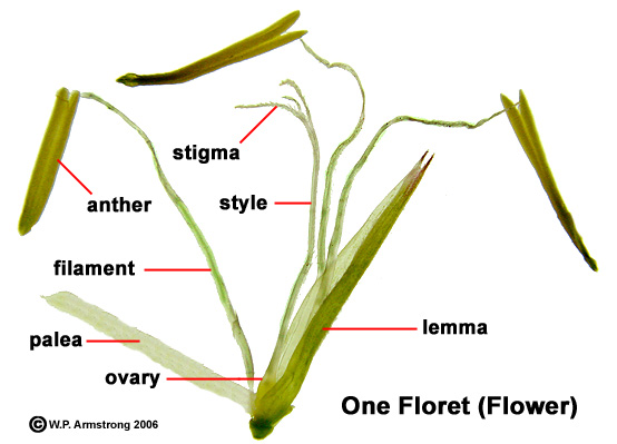Flower terminology part 2 ccuart Image collections