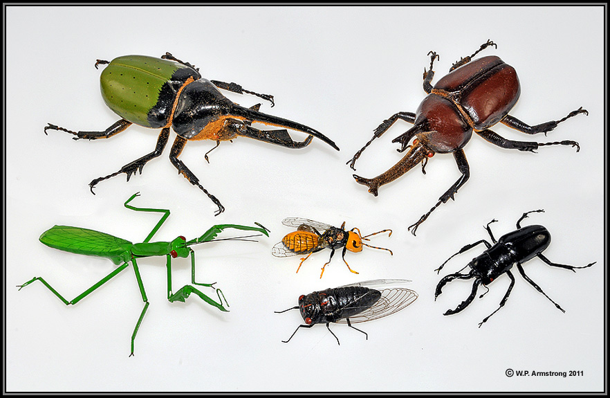 insect index