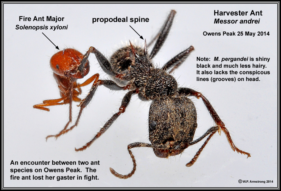 Ant Introduction